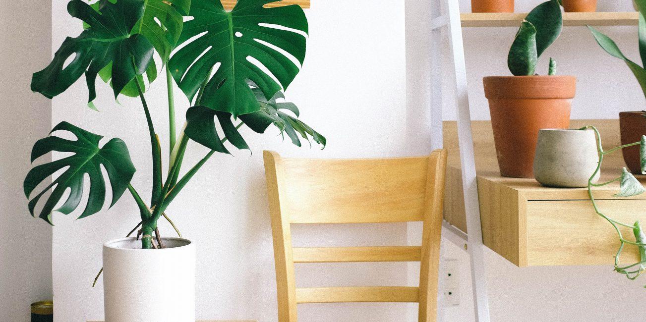 makkelijke-planten